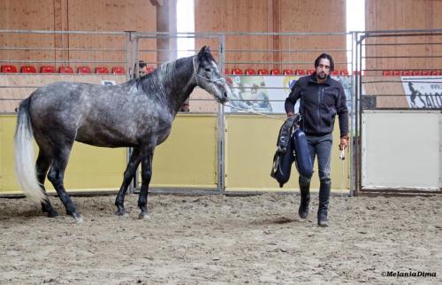 Deburajul cailor cu Denis Stefan 00101 (14)