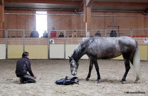 Deburajul cailor cu Denis Stefan 00101 (15)