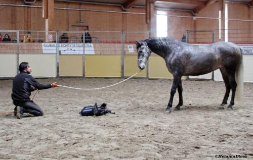 Deburajul cailor cu Denis Stefan 00101 (16)