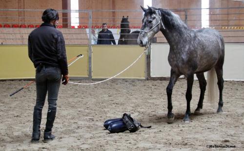 Deburajul cailor cu Denis Stefan 00101 (18)