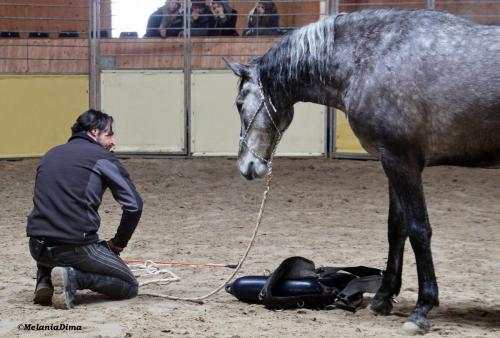 Deburajul cailor cu Denis Stefan 00101 (19)