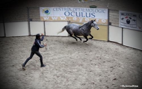 Deburajul cailor cu Denis Stefan 00101 (2)