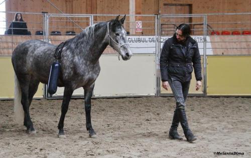 Deburajul cailor cu Denis Stefan 00101 (22)