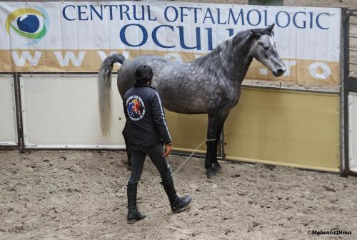 Deburajul cailor cu Denis Stefan 00101 (6)