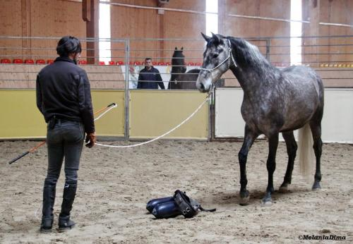 Deburajul cailor cu Denis Stefan 00101 (8)