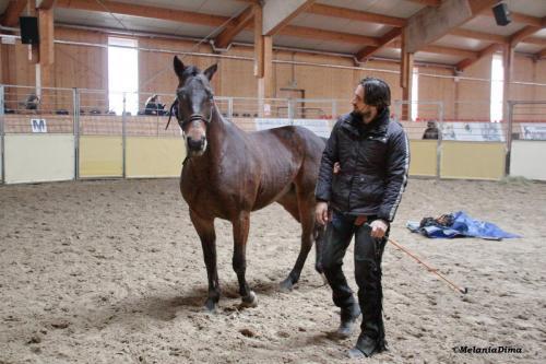 Deburajul cailor cu Denis Stefan 00102 (18)