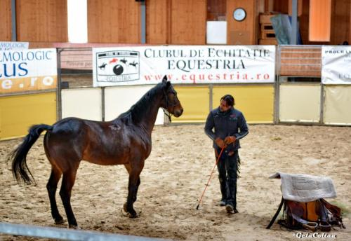 Deburajul cailor cu Denis Stefan 00102 (23)