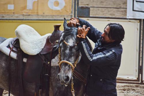 Deburajul cailor cu Denis Stefan 00102 (50)