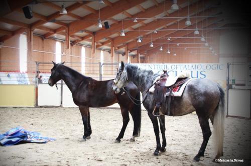 Deburajul cailor cu Denis Stefan 00102 (6)